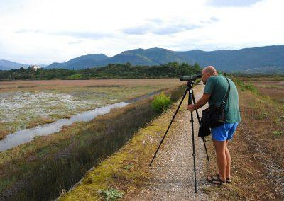 Birdwatching in Tivat, Montenegro