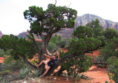 Twisted Juniper tree