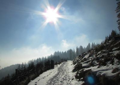 Pot iz planine Šija v smeri doma na Kofcah