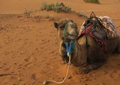 maroko (31)